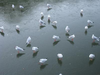 Bird01
